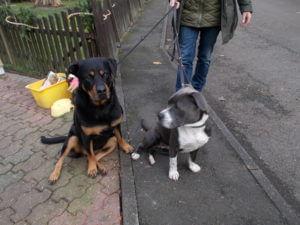 Luna mit Freundin