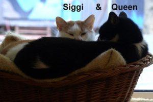 siggi-und-queen25-10-2016