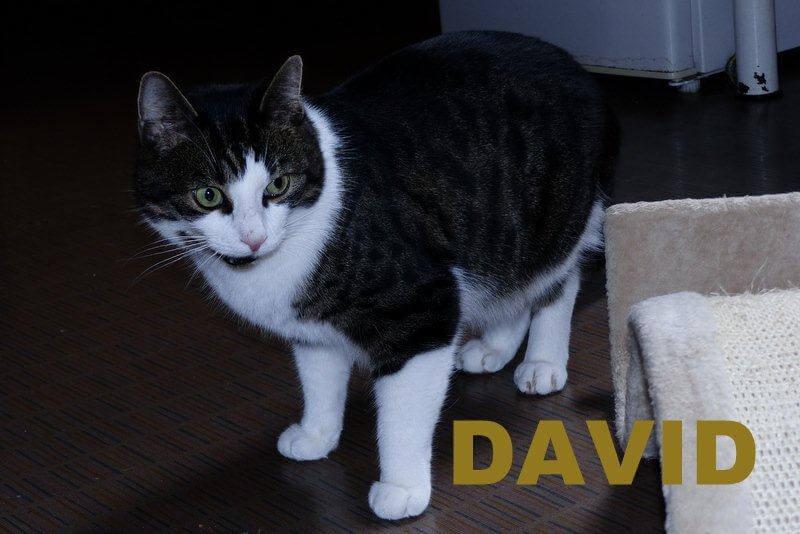 David1.16