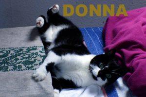 Donna1.16