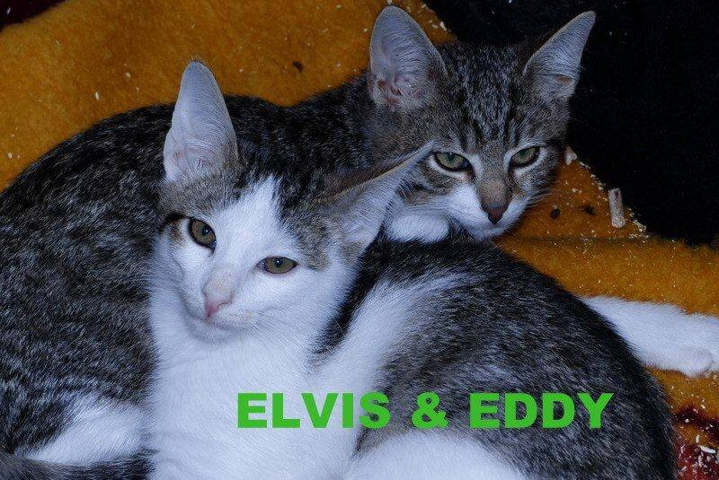 Elvis&Eddy1.16