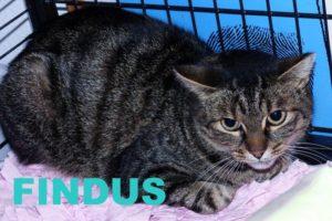 Findus1.16