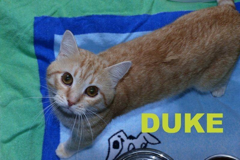 Duke1.16
