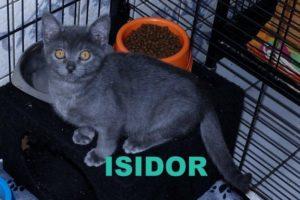 Isidor1.16