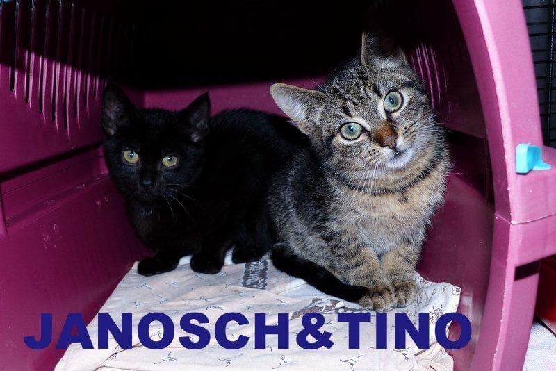 Janosch&Tino1.16