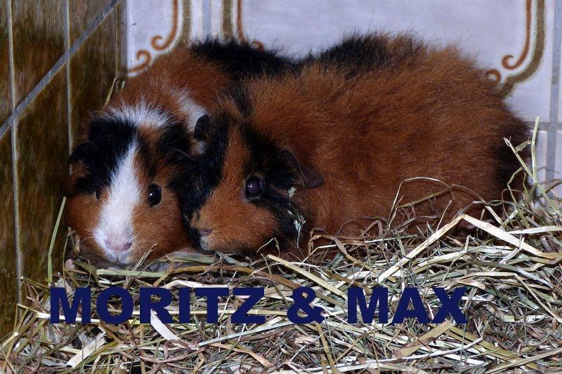 maxu.moritz2016.1