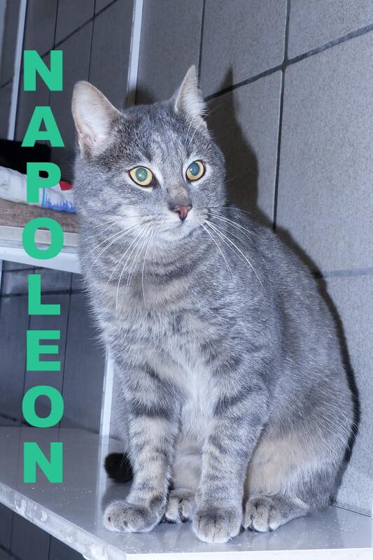 01_napoleon-2