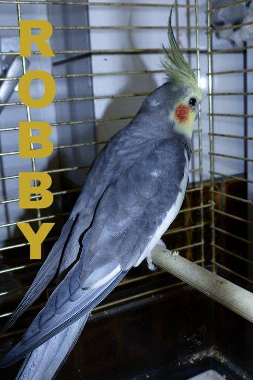 Robby10.16