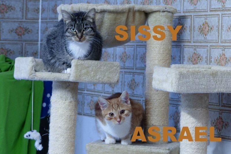 sissy-und-asrael1-16