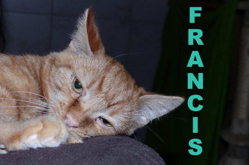 francis-211-16
