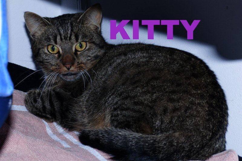 kitty11-16