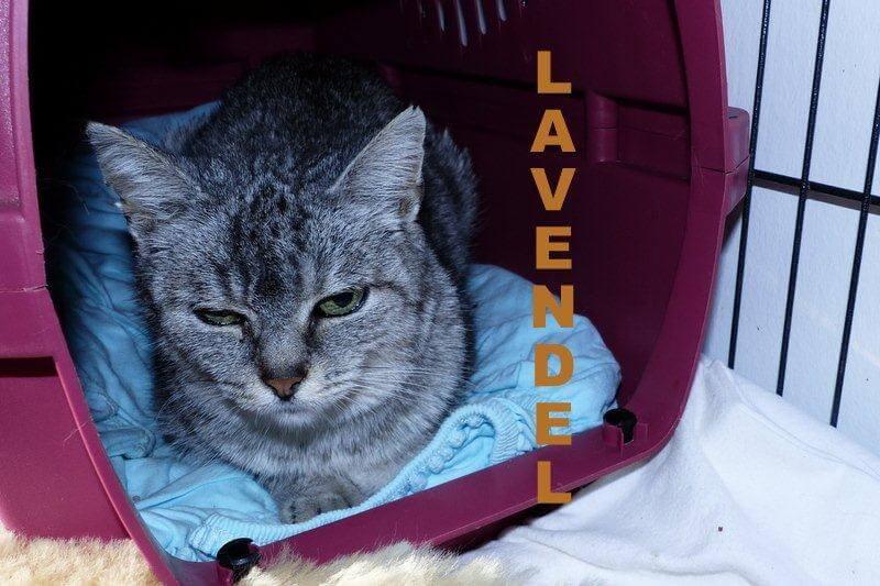 lavendel1-16