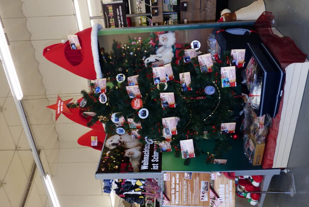 dem Weihnachtsbaum!