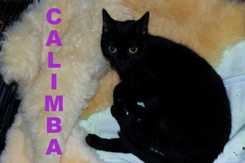 calimba1-16