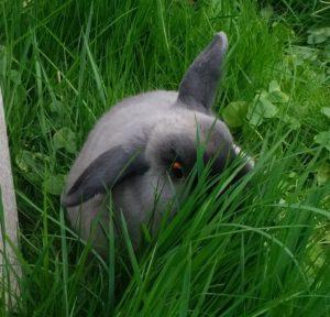 08_rabbit130517-08