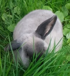 09_rabbit130517-09