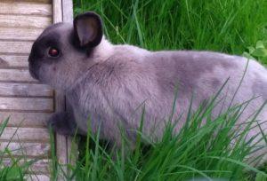 10_rabbit130517-10