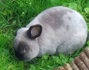 11_rabbit130517-11