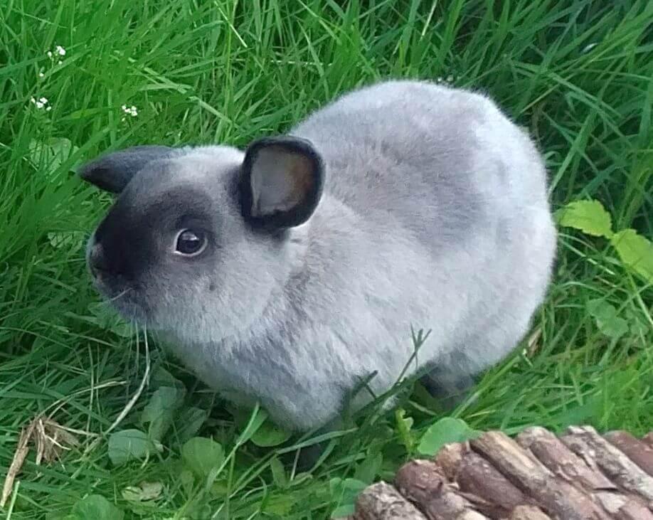 12_rabbit130517-12