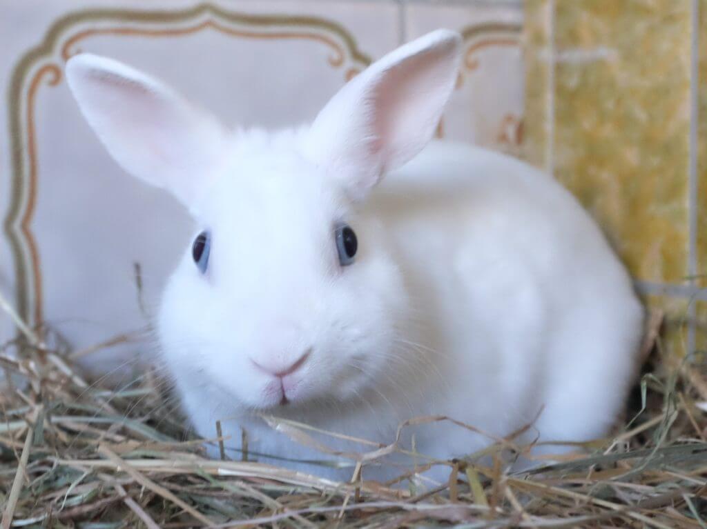06_bunny030917-006