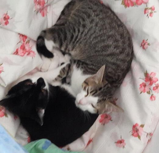 Küppi Katzen