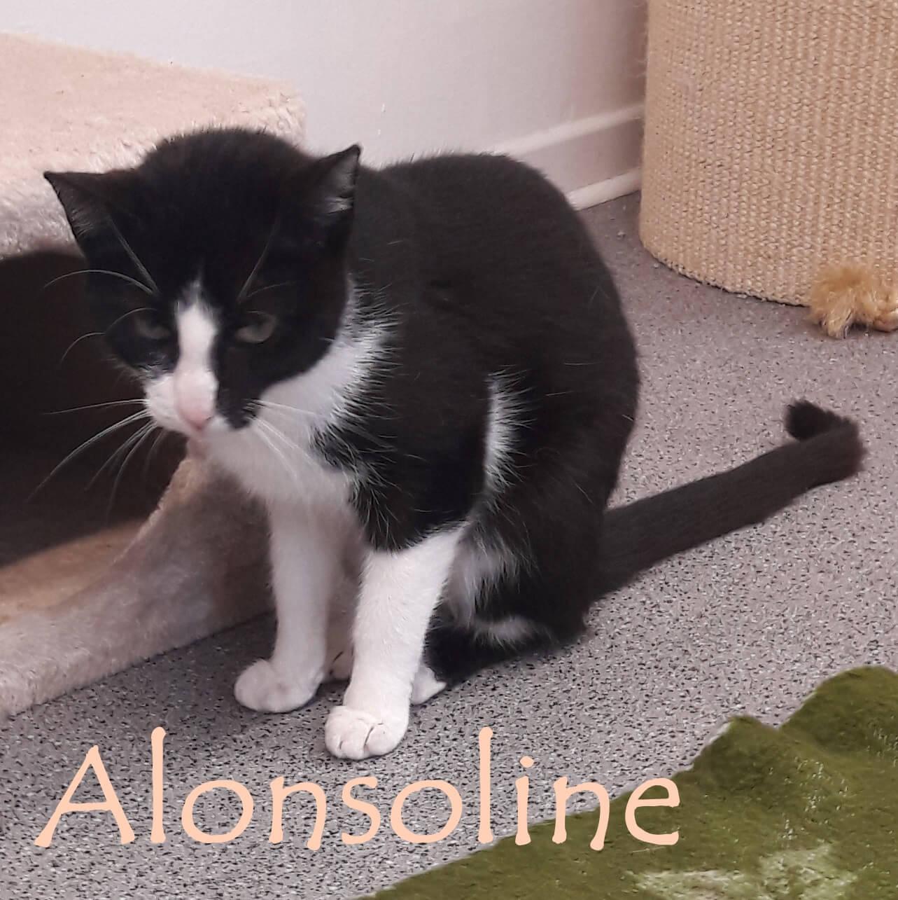 alonsoline-b