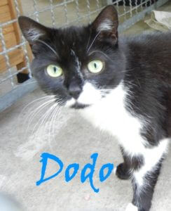 dodo-b