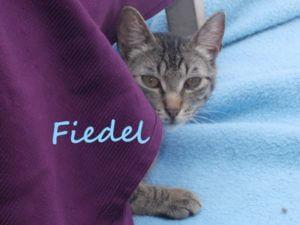 fiedel-b
