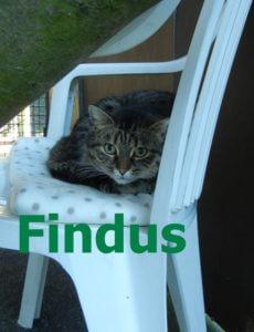 findus-b
