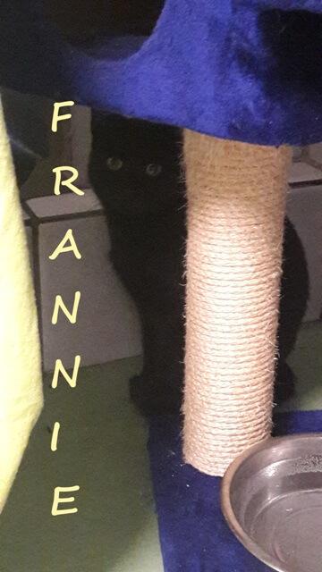 frannie-b