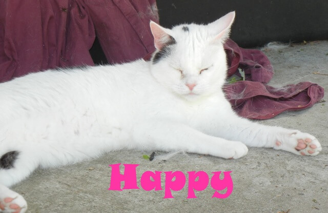 happy-b