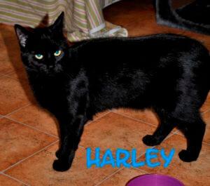harley-b