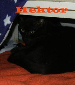 hektor-b