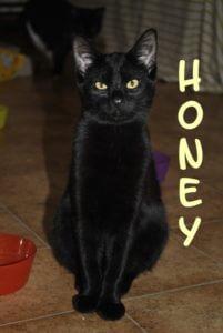 honey-b