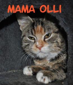 mama-olli-b