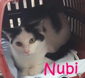 nubi-b