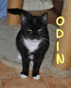 odin-b