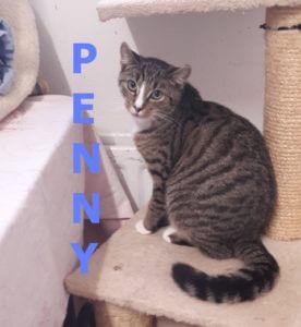 penny-b