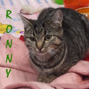 ronny-b