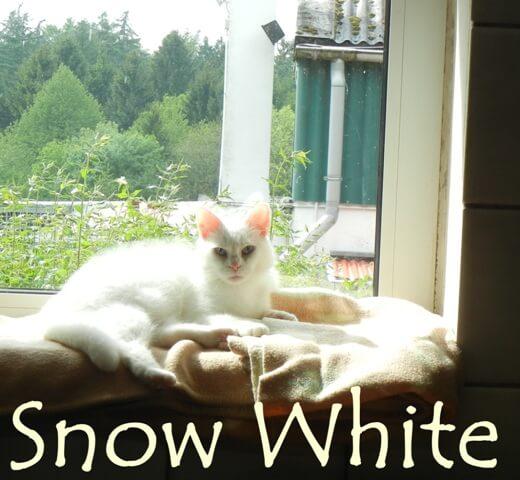 snow-white-b