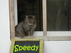 speedy-b
