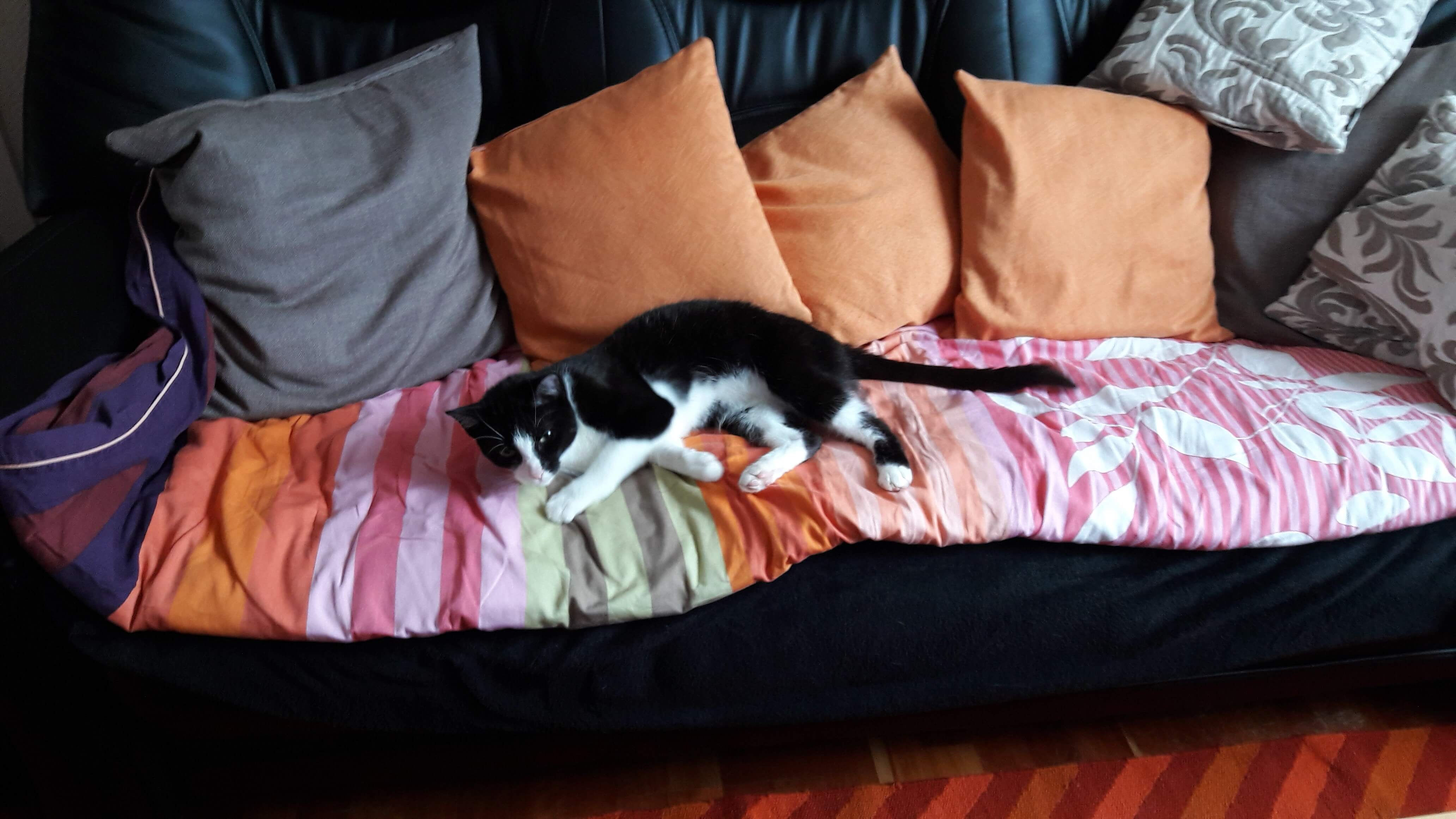 02 gem tlich auf der couch fernseh gucken tierheim remscheid. Black Bedroom Furniture Sets. Home Design Ideas